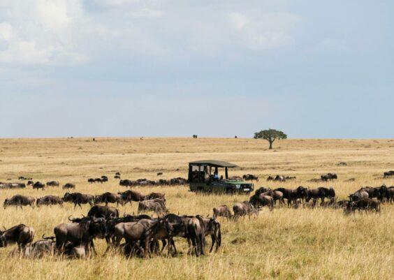 Maasai Mara Game Reserve: Safaris Económicos
